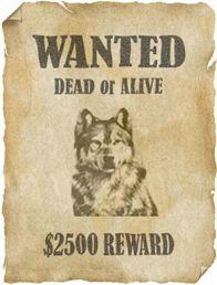 Баннер Wanted для ВКонтакте с волком